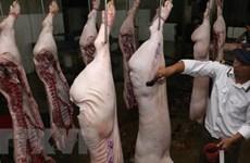 Xử phạt đối tượng đăng thông tin sai sự thật về thịt lợn nhiễm sán