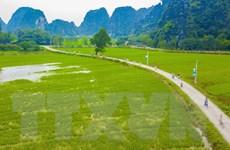 [Photo] Mê mẩn ngắm danh thắng Tam Cốc trong mùa lúa xanh ngát