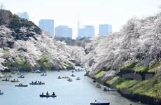 [Photo] Đến Nhật Bản, ngắm khu vườn hoa Anh đào đẹp như tranh vẽ