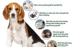 [Infographics] Những quy định bắt buộc đối với người nuôi chó