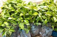 Người dân bức xúc vì cây giống được cấp phát với giá cao bất thường