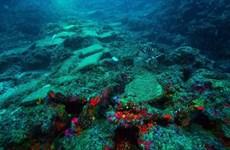 """Tìm thấy một xác con tàu đắm có """"tuổi thọ"""" 3.600 năm ở Thổ Nhĩ Kỳ"""