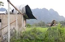 Lốc xoáy khiến hàng chục ngôi nhà ở Quảng Bình bị tốc mái