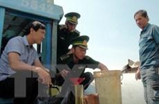 Biên phòng Bến Tre tạm giữ 16.000 lít dầu không rõ nguồn gốc