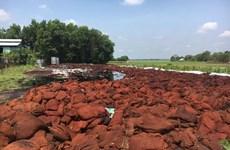 Công ty chế biến vỏ hạt điều xả thải chưa xử lý ra môi trường