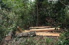 Khởi tố thêm 6 bị can trong vụ phá rừng tại Phong Nha-Kẻ Bàng