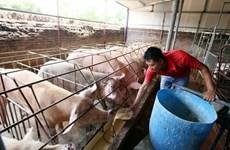 Ngành nông nghiệp tăng trưởng khá dù bị thiệt hại vì dịch tả lợn