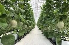 Xuất khẩu nông sản vào Trung Quốc: Thay đổi tư duy để thích ứng