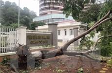 Bão số 2 gây nhiều thiệt hại tại các địa phương, làm 2 người chết