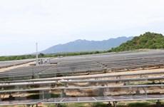 Sớm đưa Ninh Thuận thành trung tâm năng lượng tái tạo của cả nước
