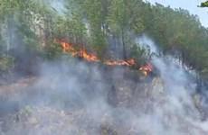 Khởi tố các đối tượng liên quan đến vụ cháy rừng ở Hà Tĩnh