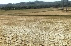 Quảng Nam đối diện tình trạng hạn hán và xâm nhập mặn lịch sử