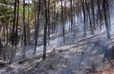 Cháy 5ha rừng thông do người dân đi viếng mộ, đốt hương bất cẩn