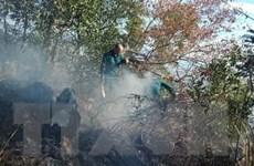 Cháy gần 11ha rừng tràm và thực bì do người dân đốt vàng mã