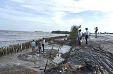 Biến đổi khí hậu 'bủa vây' vùng bán đảo Cà Mau: Sống nơi đầu sóng