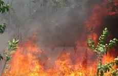 Thừa Thiên-Huế: Cơ bản khống chế được đám cháy rừng ở vùng Bàu Co