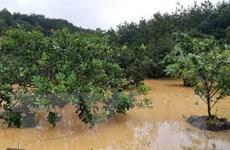 Giải cứu 2 người mắc kẹt trên cây điều giữa dòng nước lũ chảy xiết