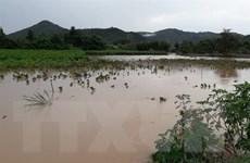 Lũ quét gây thiệt hại nặng nề cho vùng nông nghiệp công nghệ cao