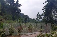 Nhà máy thủy điện Đắk Sin 1 bị ngập lụt, phải dừng hoạt động