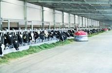 Xây dựng vùng chăn nuôi bò sữa an toàn dịch bệnh tại Tây Ninh