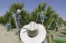 Mỹ: Bang California cấm sử dụng thuốc bảo vệ thực vật chlorpyrifos