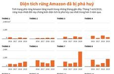 [Infographics] Diện tích rừng Amazon bị phá hủy trong hơn 3 năm qua