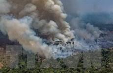 Peru, Colombia đề nghị tổ chức hội nghị thượng đỉnh khu vực Amazon