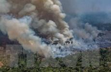 Các quốc gia Nam Mỹ ký thỏa thuận phối hợp bảo vệ rừng Amazon
