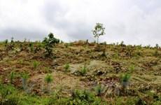Đắk Nông: Nhiều sai phạm tại dự án nông lâm nghiệp ở Tuy Đức
