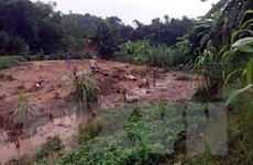 Mưa lớn gây nhiều thiệt hại về người và tài sản tại Tuyên Quang