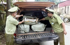 Thu giữ 400kg nầm lợn nhập lậu không đảm bảo vệ sinh thực phẩm