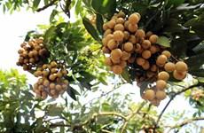 [Mega Story] Trái cây Việt Nam vươn ra thị trường thế giới