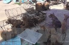 Khởi tố 16 đối tượng trong đường dây trộm hơn 100 tấn chó