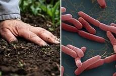 Xử phạt đối tượng tung tin đồn thất thiệt về vi khuẩn Whitmore