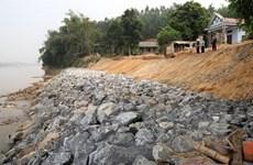 Phú Thọ: Được kè khẩn cấp, bờ sông Thao vẫn tiếp tục sạt lở