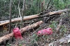 Kon Tum: Khởi tố vụ phá rừng, đốn hạ 32 cây to ở huyện Kon Plông
