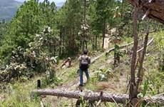 Lâm Đồng kiểm tra, xử lý vụ triệt hạ rừng thông ở huyện Lâm Hà