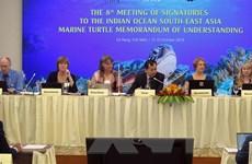 Tăng cường quản lý, bảo tồn rùa biển ở Ấn Độ Dương và Đông Nam Á