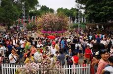 Nhiều hoạt động hấp dẫn tại Lễ hội Hoa anh đào Nhật Bản ở Hà Nội