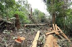 Gia Lai: Chuyển hồ sơ vụ mất hơn 1.470ha rừng sang cơ quan điều tra