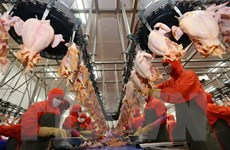Công nghiệp thực phẩm Việt Nam có tiềm năng lớn trong thu hút đầu tư
