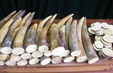 Kháng nghị việc áp dụng án treo trong vụ mua bán 17kg ngà voi