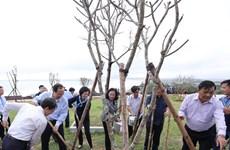 Vinamilk trồng 110.000 cây xanh góp phần phủ xanh tỉnh Bình Định