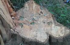 Xác định nhóm đối tượng phá rừng đặc dụng tại tỉnh Đắk Lắk