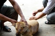 Thái Nguyên: Bé trai 4 tuổi bị chó cắn đứt khí quản, chảy nhiều máu