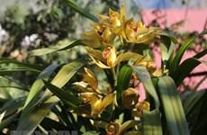 Nông dân phấn khởi vì hoa Đà Lạt nở đúng dịp, giá tăng cao
