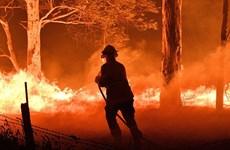 Chiến dịch thông tin sai lệch trong thảm họa cháy rừng ở Australia
