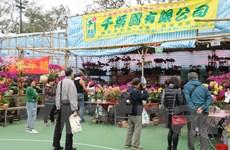 Lượng khách đến hội chợ hoa Xuân Hong Kong 2020 giảm đáng kể