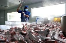 Thêm cơ hội mở rộng thị trường cho doanh nghiệp xuất khẩu cá tra