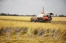 Thực hiện quy định về dự trữ, lưu thông và bình ổn giá lúa gạo